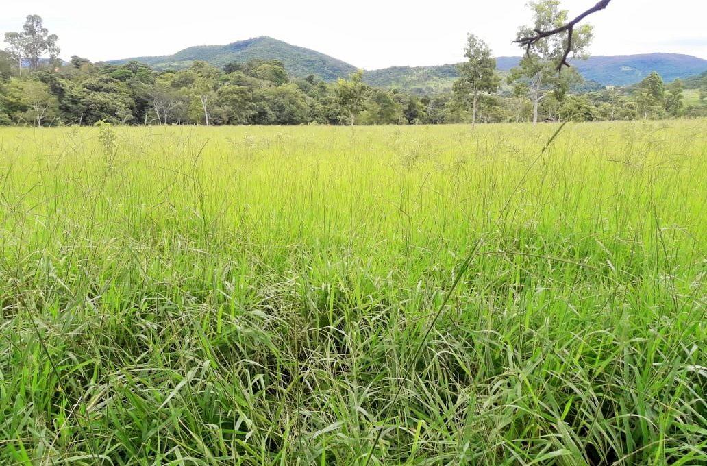 Venda de Imobiliária Pirenópolis - Goiás